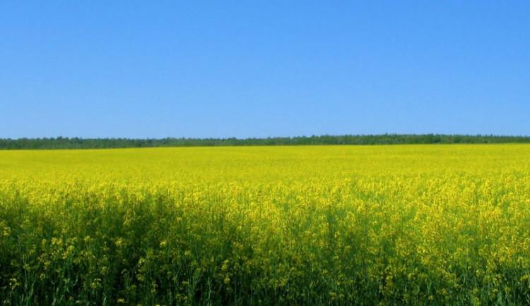 Vláda projedná návrh k další daňové podpoře biopaliv