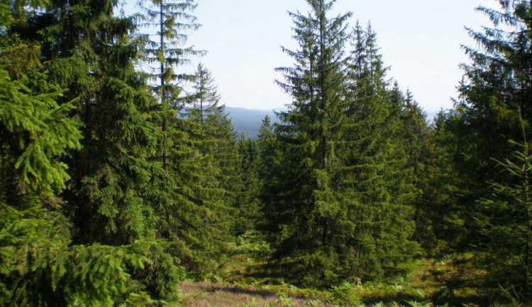 Třetinu České republiky pokrývají lesy, od roku 1950 vzrostla jejich plocha o 154 tisíc hektarů
