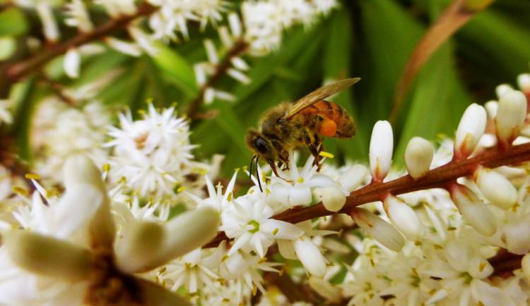 Alergiky trápí pyl z břízy, teplo a sucho situaci zhoršuje