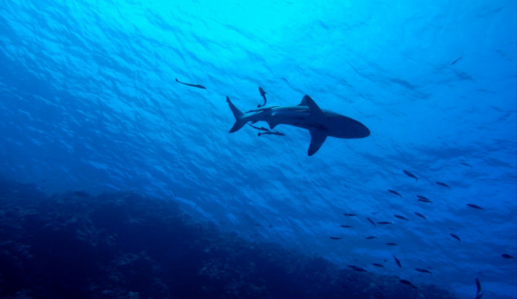 V Egyptě zemřel český turista napadený žralokem