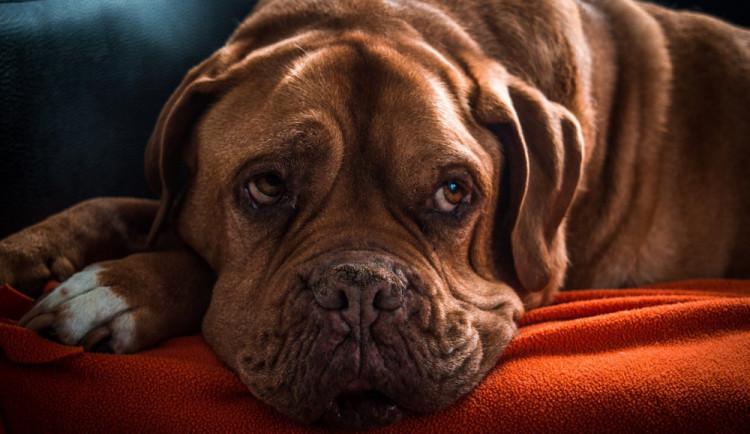 Desítky ztracených psů a bezradní páníčci, v útulcích mají i po Silvestru napilno