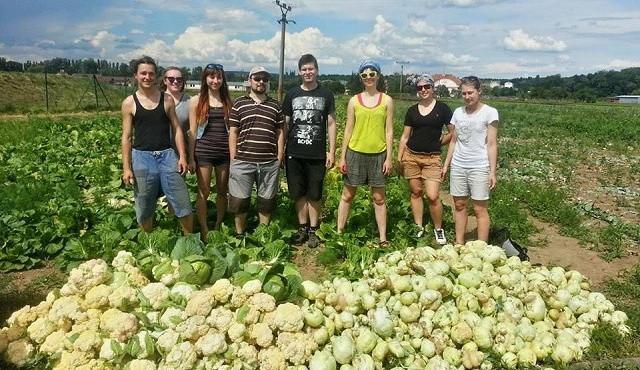 I ošklivá zelenina má šanci! Paběrkování po brněnsku zachrání ročně tuny přebytečných plodin