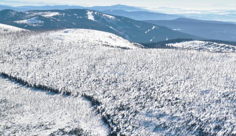Vláda schválila miliardy pro vlastníky lesů kvůli kůrovci