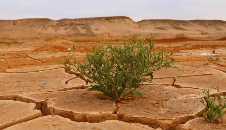 OSN varuje: každý týden dochází minimálně k jedné klimatické katastrofě
