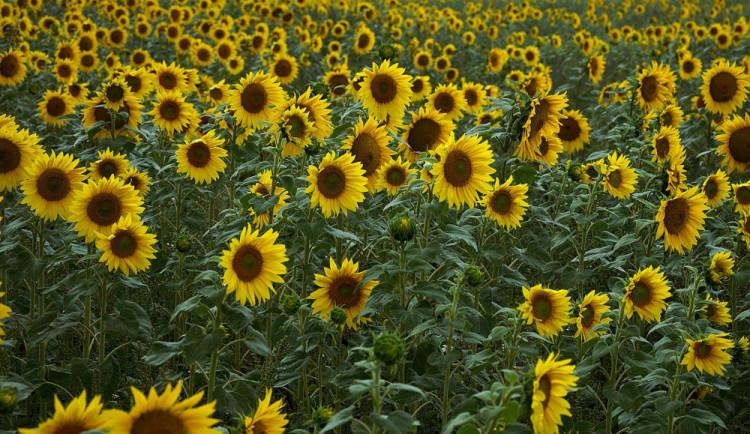 Do konce srpna teploty pozvolna klesnou, v září se slabě oteplí