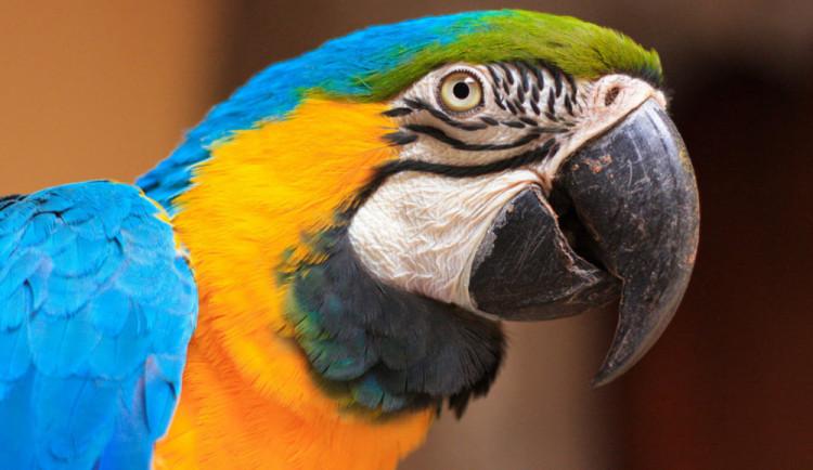 Návštěvník v táborské zoo málem zabil papoušky, krmil je sušenkami