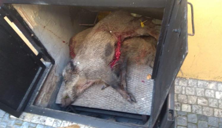 Restauraci, která uchovávala ve výtahu těla mrtvých zvířat, hrozí pokuta až 50 milionů